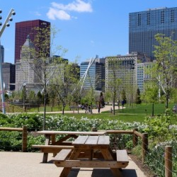 Maggie Daley Park Corporate Company Picnic