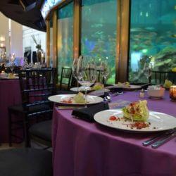 Corporate Reception Shedd Aquarium Chicago